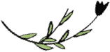 logo-in-banner